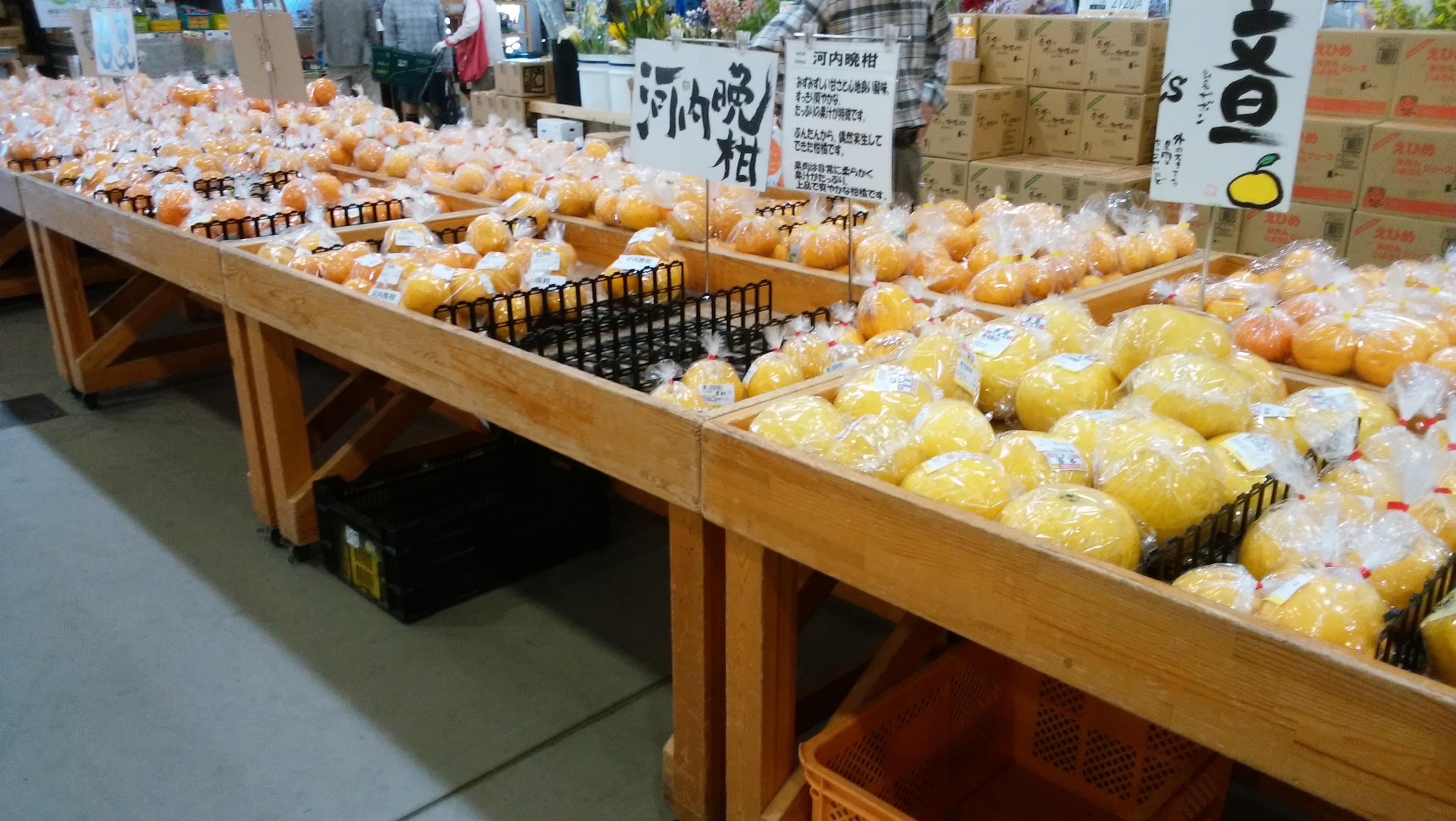 さいさいきて屋柑橘系
