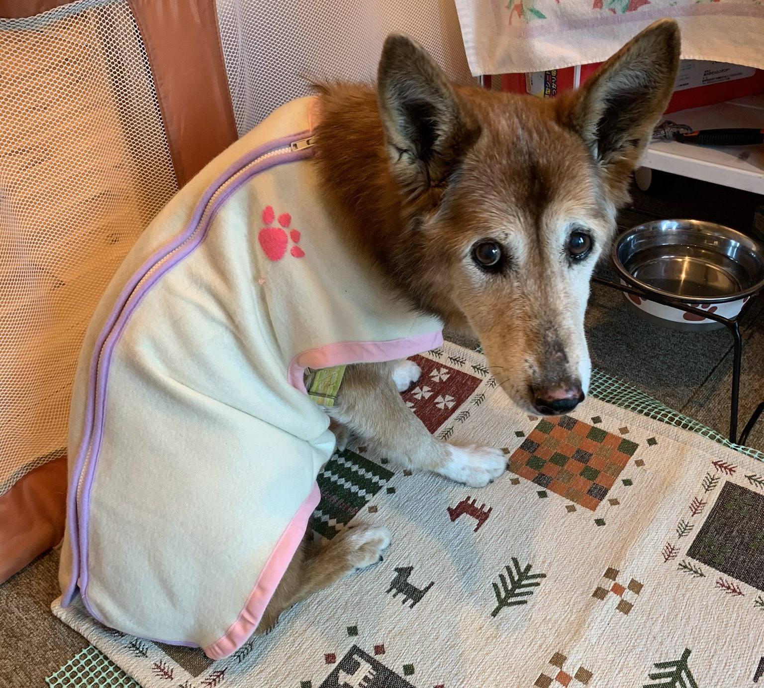 手作りの犬のベスト
